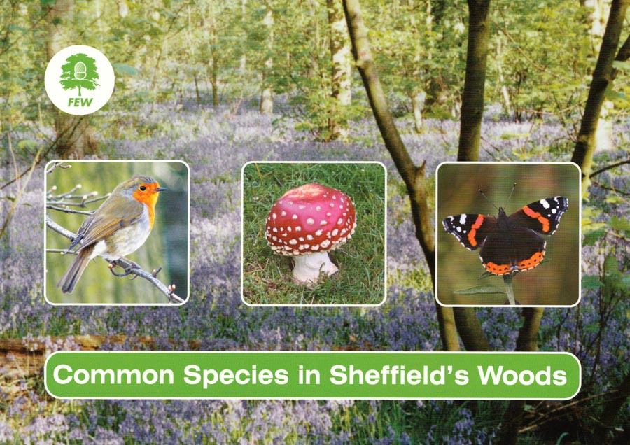 """Common Species in Sheffield's Woods"