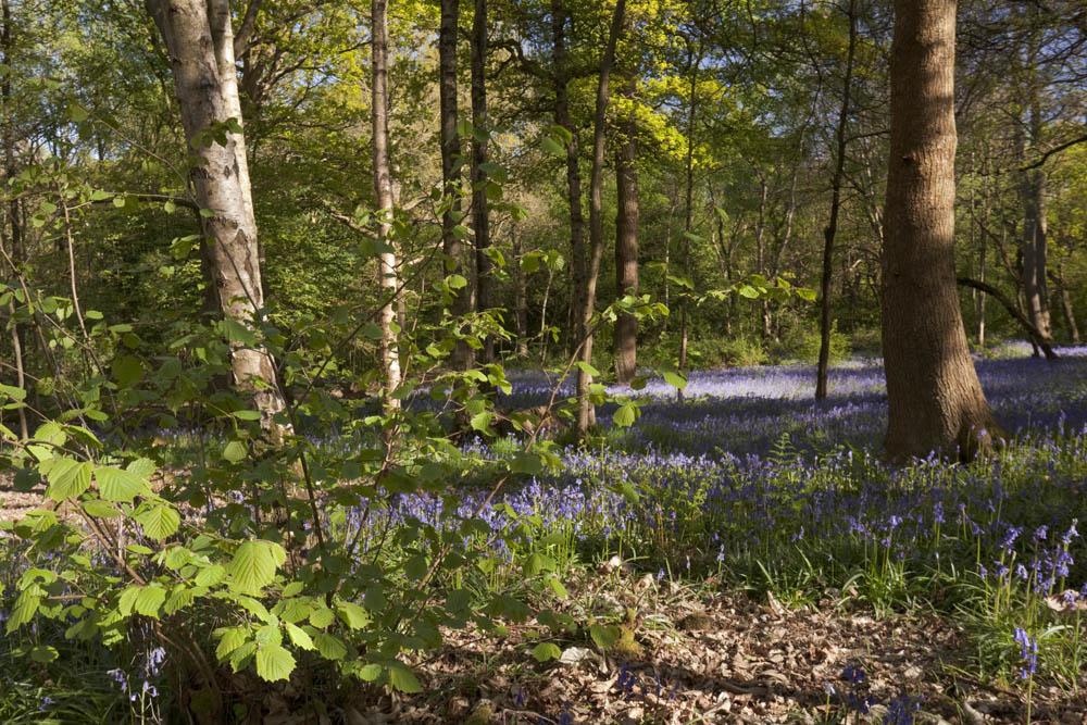 """""""woodland flora,"""