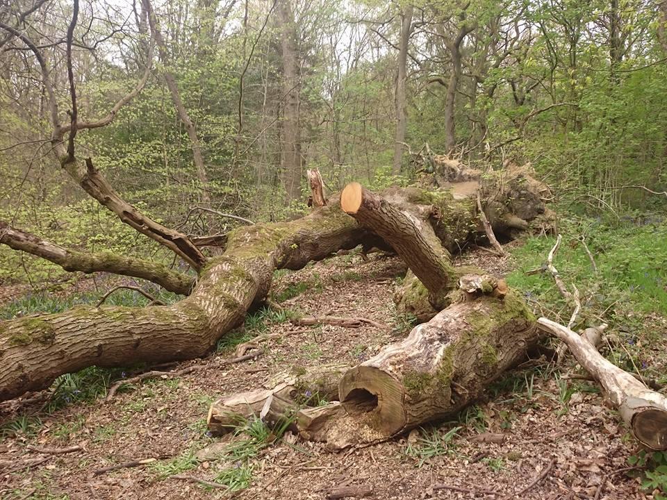 """""nurse log habitat,"