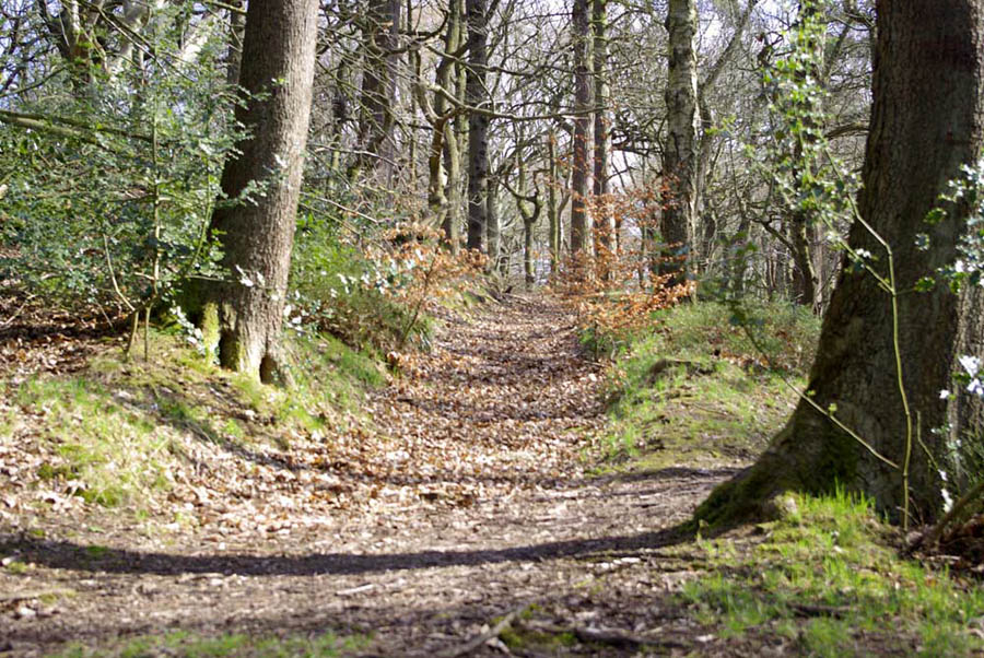 """Sunken lanes, or hollow ways, are an example of the archaeology found within Ecclesall Woods.,"