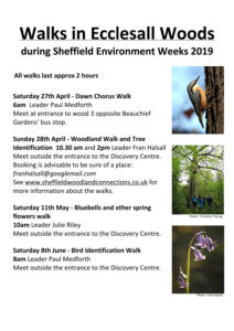 Sheffield Environment Weeks 2019 – Ecclesall Woods walks