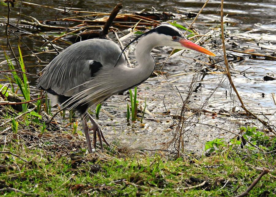 Birds recorded on 14th March bird walk