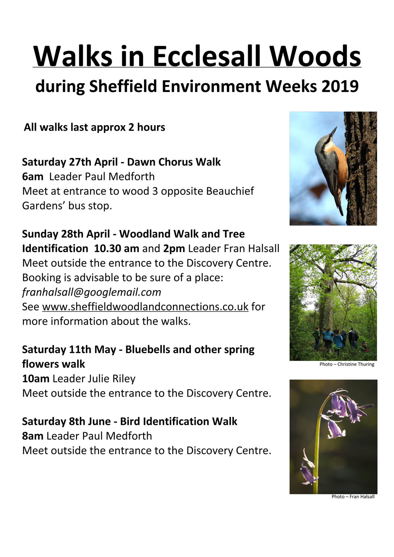 Sheffield Environment Weeks 2019 – Ecclesall Woods walks